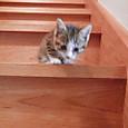 階段に挑戦
